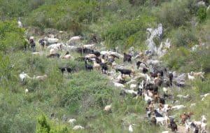 geiten es vedra ibiza